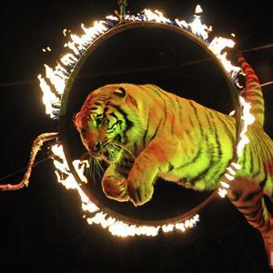 Цирки Льгова